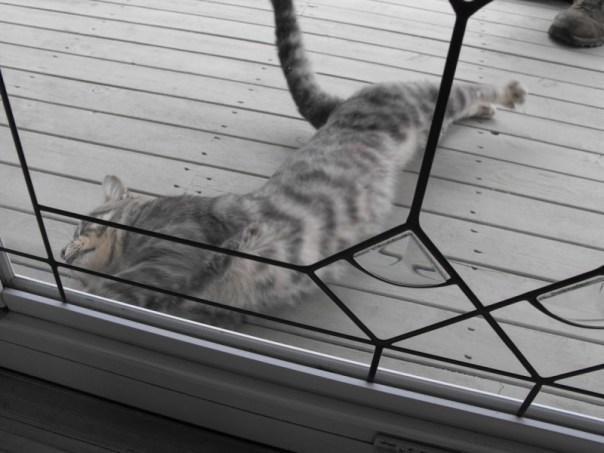 20130925-cat3