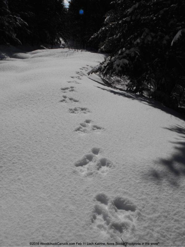 footprints,snow,winter,Loch Katrine,Nova Scotia