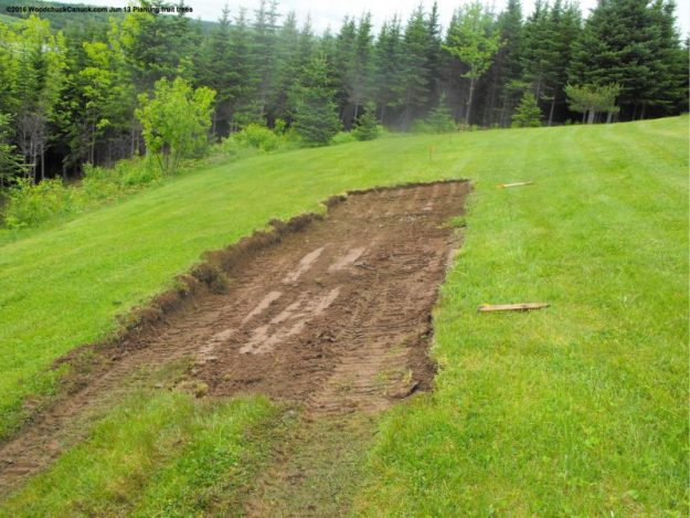 grass,sod,fruit trees,landscaping,skidsteer,CAT 257B2