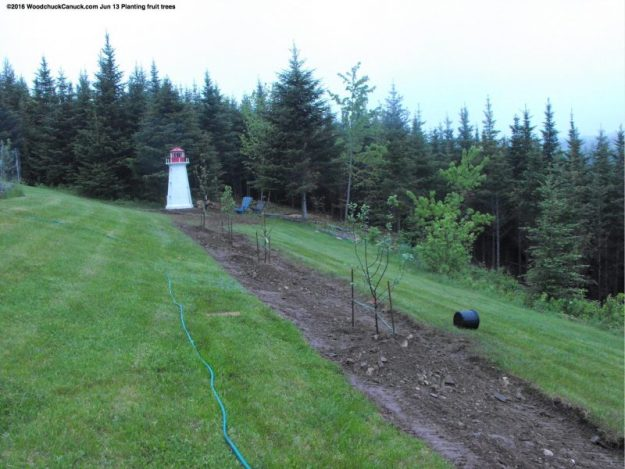fruit trees,landscaping,skidsteer,CAT 257B2,Peggy's Cove Lighthouse