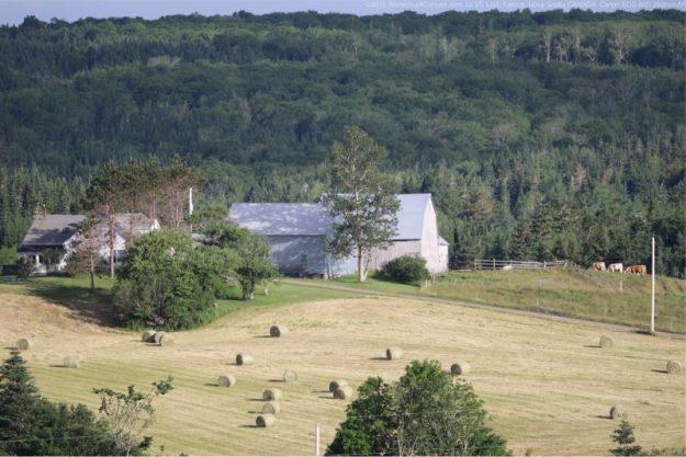 homesteading,farm,cows,Loch Katrine,Nova Scotia