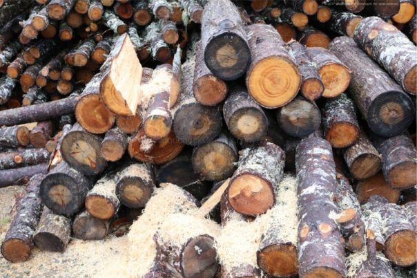 chainsaw carving, wood shavings, wood piles, woodworking