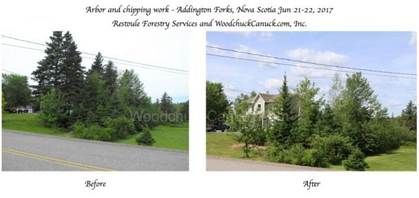 before and after, arborist work, tree felling, forestry