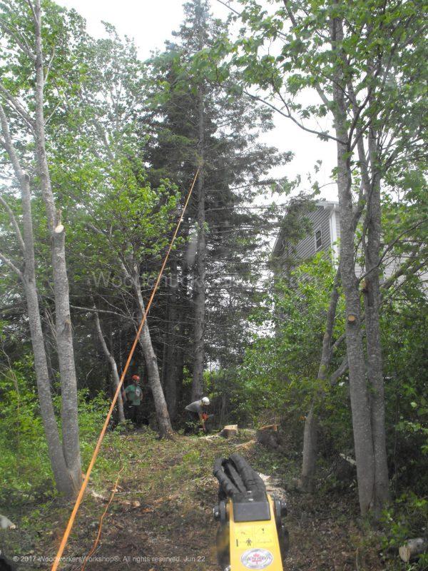 felling trees, arborist,forestry