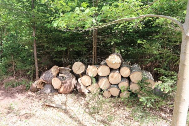 forestry,landscaping,piles of spruce wood