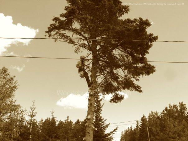 arbosit,foresty management services,Nova Scotia
