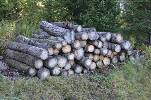 logs,milling,saw mill