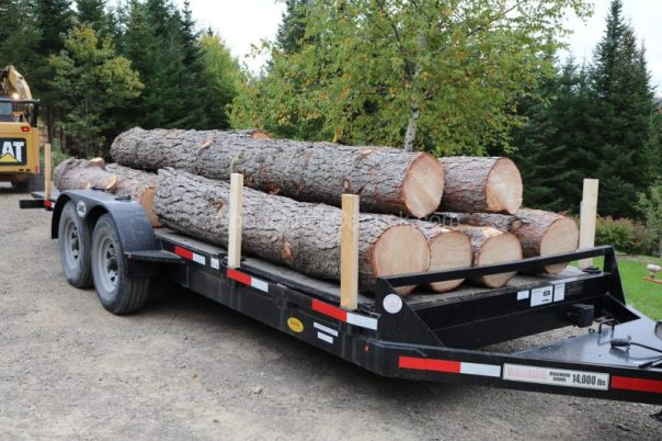 pine logs,trailer