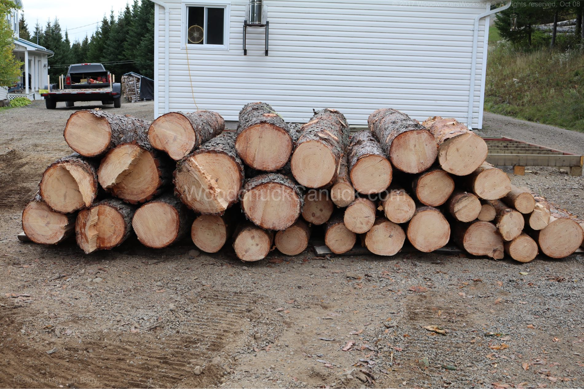 Lots of pine lumber in our future.
