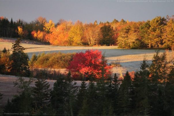 fall,leaves,frost