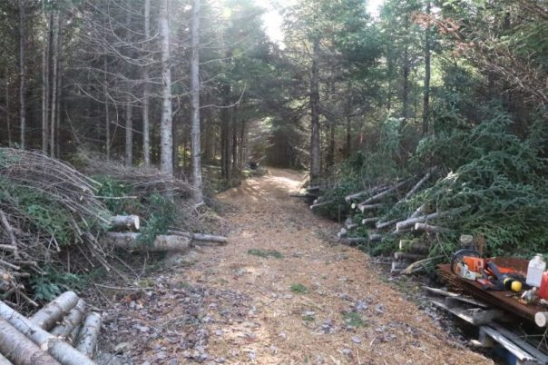 pulp wood,Nova Scotia, wood lot owners,land clearing