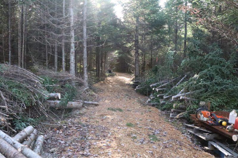 pulp wood,Nova Scotia, wood lot owners,land clearing