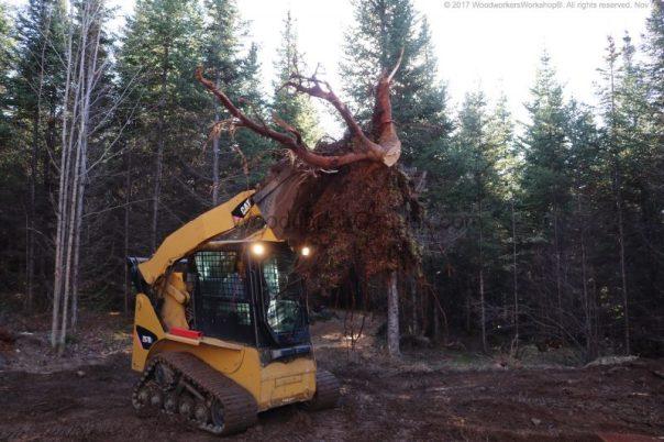 landscaping,skidsteer,stumps