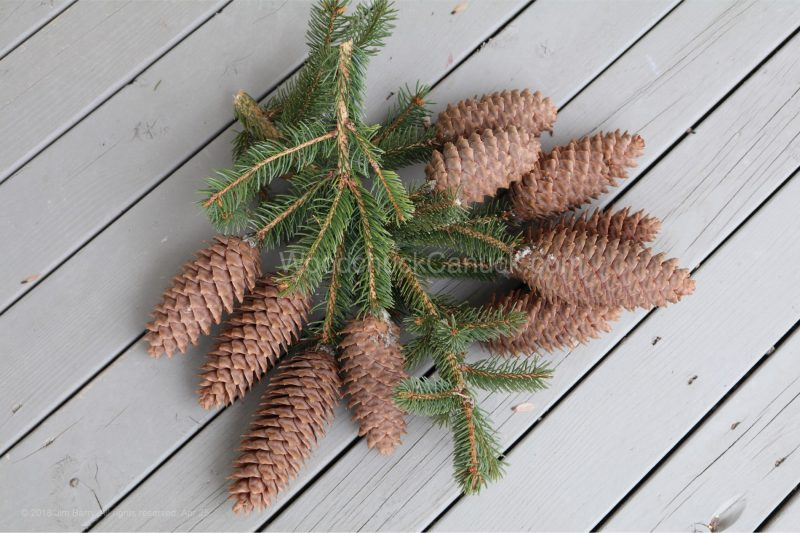 skidsteer,garden,pine cones