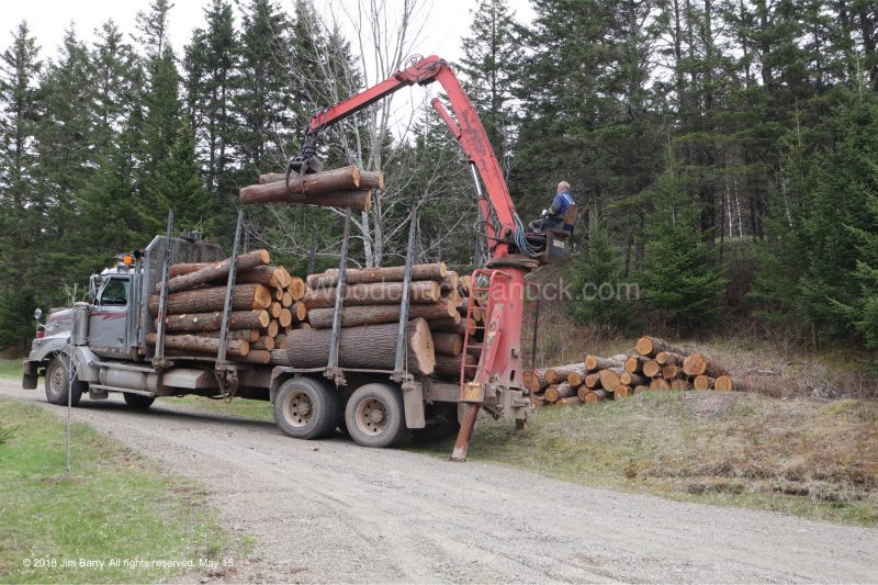 hemlock,pine,logs