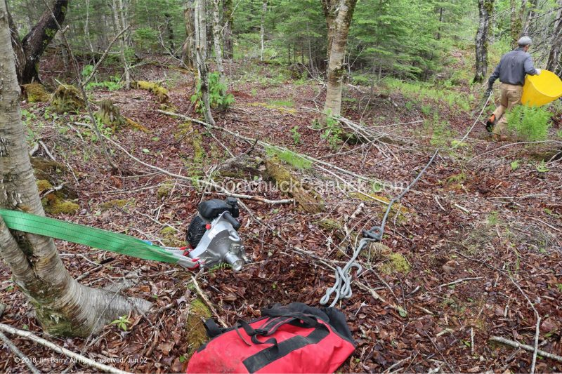 white ash, Antigonish County,Nova Scotia,sustainable forestry