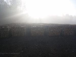 20190914-firewood-sunrise-2