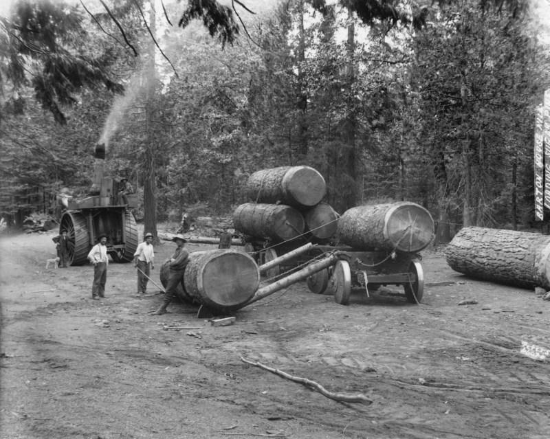 1900 Parbuckling logs, Clipper Mills, CA.