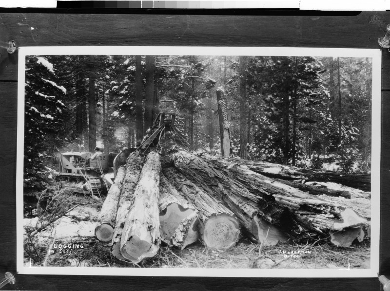 1935 Logging in California.
