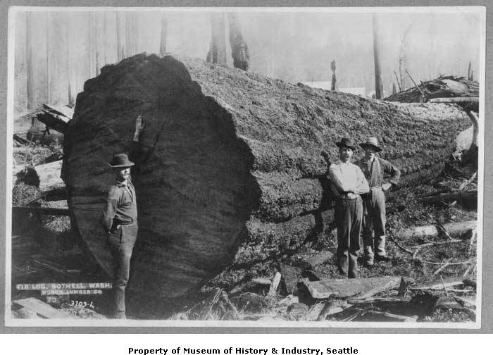 1895 Fir log at Huron Lumber Company