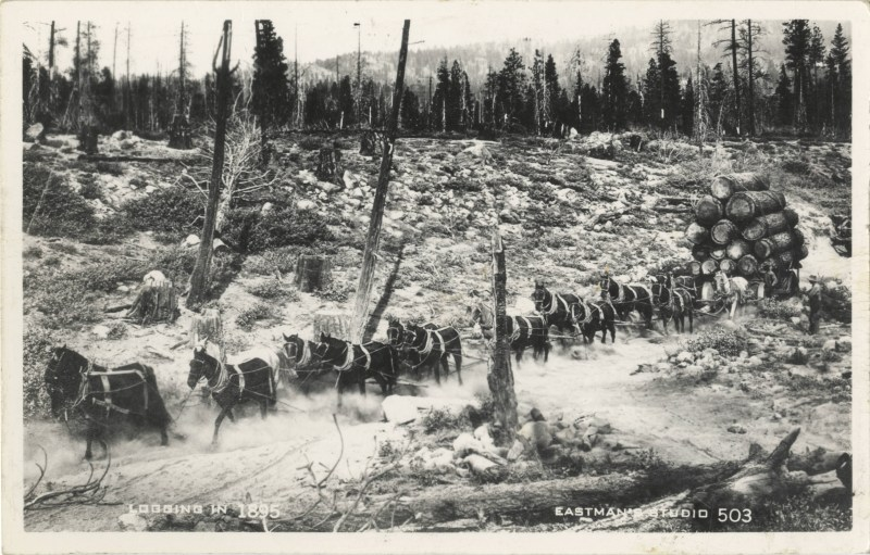 1895 Logging Wagon in Siskiyou County, CA.