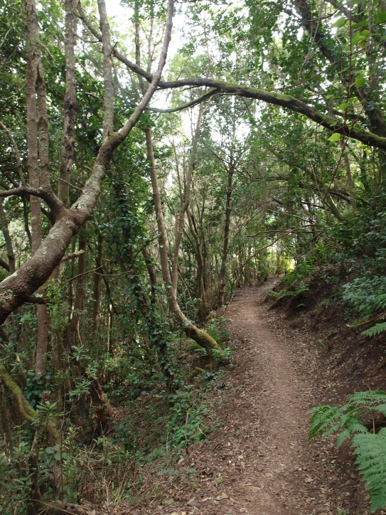 Descent from El Cedro