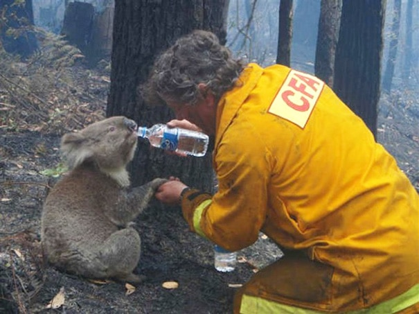 Victorian Bushfire Wildlife Nests