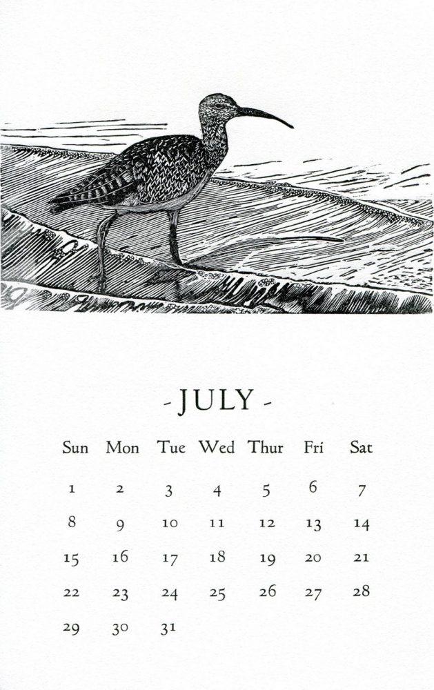 Neil Peck's Shorebird cools July!