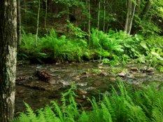 Čiurlenantis upelis.