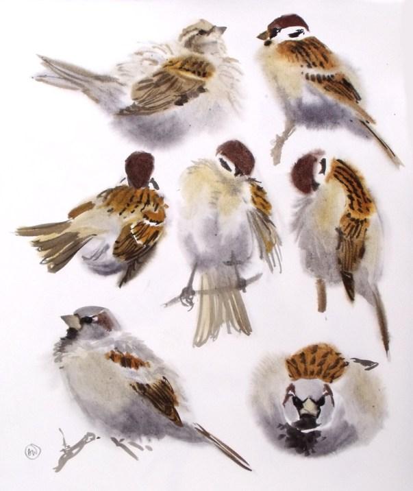 Sparrow Studies
