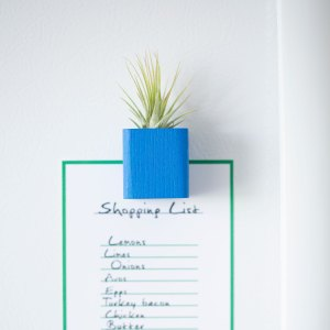 Blue Air Plant Magnet