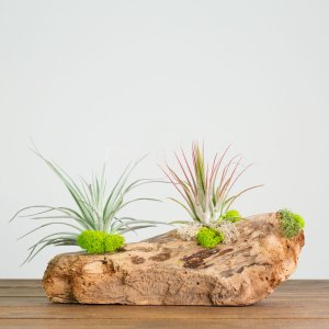 Driftwood Plant Display