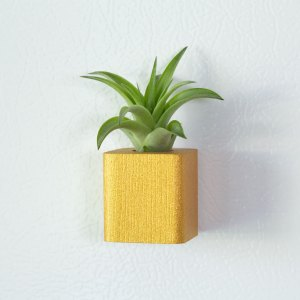 Gold Air Plant Magnet