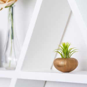 Gold Urchin Air Plant Display