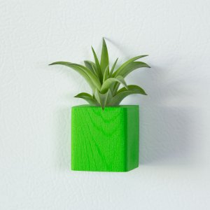 Green Air Plant Magnet