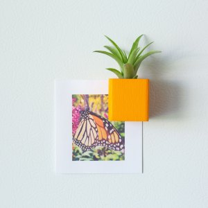 Orange Air Plant Magnet