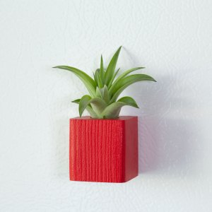 Red Air Plant Magnet