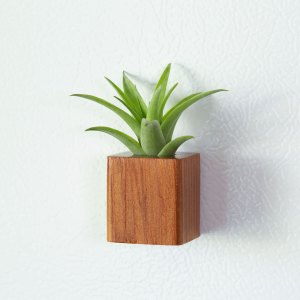 Square Air Plant Magnets