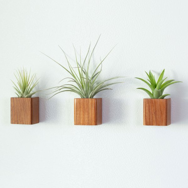 Set of 3 Redwood Air Plant Magnets