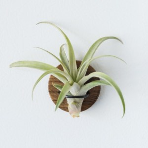 Round Air Plant Magnets