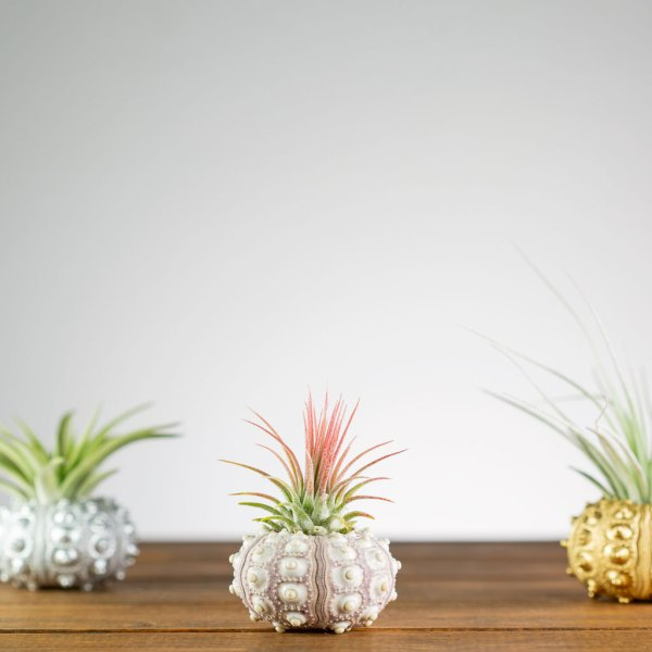Set of 3 Sputnik Urchin Air Plant Holders