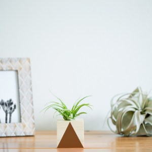 Tall Triangle Air Plant Planter