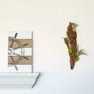 Driftwood Wall Display