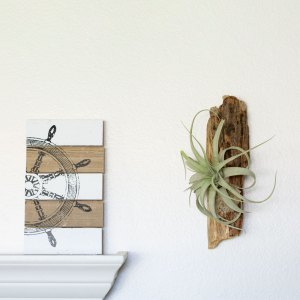 Air Plant Driftwood Wall Display