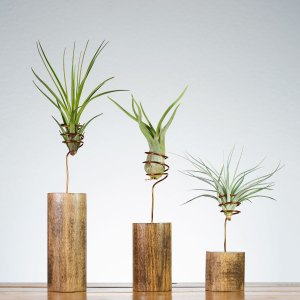 Set of 3 Walnut Wire Vase