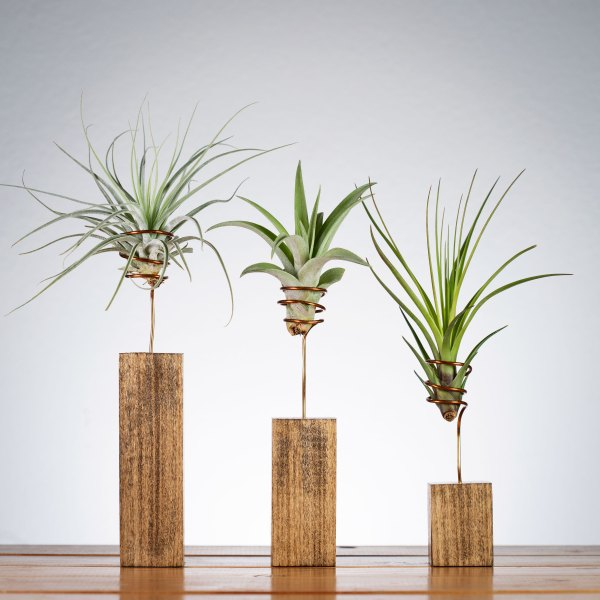 Set of 3 Walnut Wire Air Plant Displays