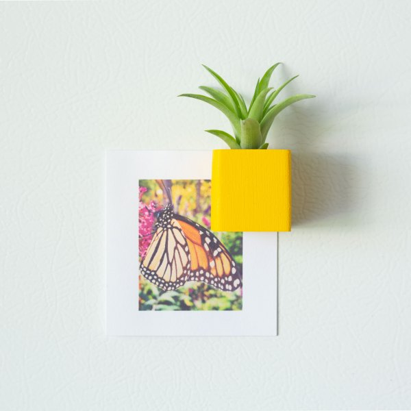 Yellow Air Plant Magnet