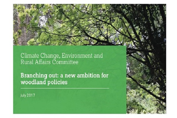 Branching Out: A new ambition for woodland policies