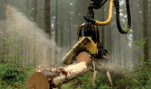 Log in forest being cut in half.