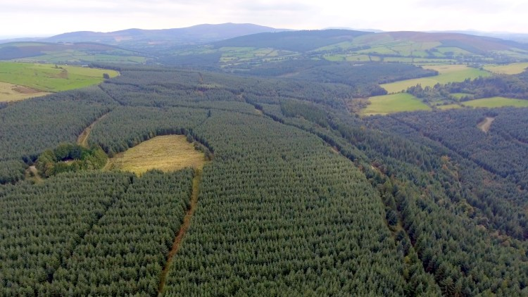 Areal view of forested landscape in Ireland